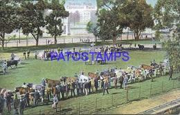 95083 ARGENTINA BUENOS AIRES EXPOSICION RURAL POSTAL POSTCARD - Argentina