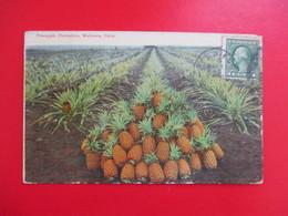 CPA ETATS UNIS HAWAI PINEAPPLE PLANTATION WAHIAWA OAHU PLANTATION ANANAS - Oahu
