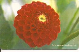 CARTEµ-PUCE-TURQUIE-100U-2003-FLEURS/DALHIA ???-BE-RARE - Fleurs