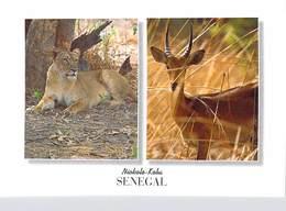 Afrique > COULEURS Du SENEGAL NIOKOLO KOBA Le Lion Et L'Antilope  (RENAUDEAU 1184)  *PRIX FIXE - Sénégal