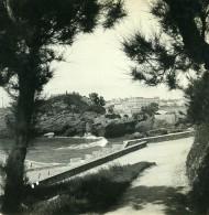 France Biarritz Route Du Port Les Tamaris Ancienne Photo Stéréo CPS 1900 - Stereoscopic