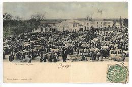 SAUJON - Saujon