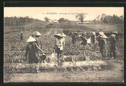 CPA Suzannah, Arrosage Des Pépinières D'hévéas - Viêt-Nam