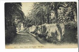 CPA - Carte Postale -Tunisie - Dans L'oasis ,une Séquia - 1915 S654 - Tunisie