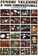 POS 06 - POSTER Cm. 100x70 - FUNGHI VELENOSI E NON COMMESTIBILI - Posters