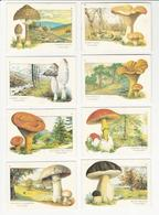 8 Calendars * Portugal * 1985 * Mushrooms * Cogumelos - Petit Format : 1981-90
