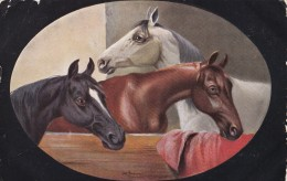 AR58 Animals - 3 Horses In A Stable By Alf Schonian - Tuck Oilette - Horses