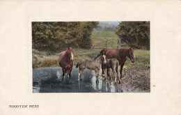 AR58 Animals -Horses With Foals By A Stream, Noontide Heat - Horses