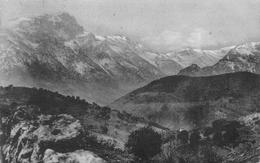 Monte Padro Olmi Capella Canton Belgodère Et Asco Canton Morosaglia - France