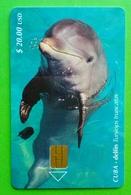 CUBA - Delfin Tursiops Truncatus - Cuba