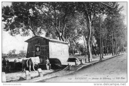 D64- Cpa -  BAYONNE - AVENUE DE MARRACQ < BOUVIERS AU REPOS - Bayonne