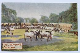 TEA WAGONS, CEYLON (Sri Lanka), Lipton Series Postcard, 1909 - Sri Lanka (Ceylon)