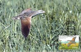 2007 - BIRD - CORNCRAKE (Crex Crex) - Belarus