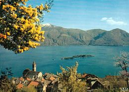 1 AK Schweiz * Blick Auf Den Ort Ronco Sopra Ascona Und Die Isole Di Brissago Im Lago Maggiore - Luftbildaufnahme * - TI Ticino