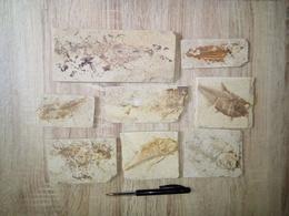 (T2) 8 Plaques De Poissons Fossilisés - Fossils