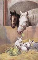 AR59 Animals - Horses And Rabbits By K Feiertag - Horses