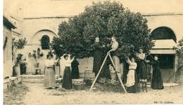 30 - Rochefort Du Gard : Cueillette Du Tilleul - Rochefort-du-Gard