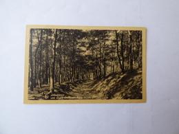 Archennes    Une   Allée  Dans  Les  Bois - Grez-Doiceau