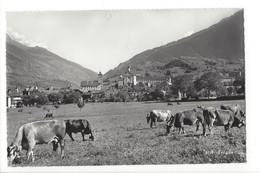 20065 - Brigue Vaches - Vaches