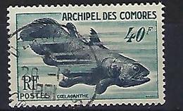 "Comores YT 13 "" Faune Marine "" 1954 Oblitéré - Used Stamps"