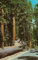 CARTE POSTALE ORIGINALE DE 9CM/14CM : YOSEMITE NATIONAL PARK CALIFORNIA THE FALLEN MONARCH   USA - Yosemite