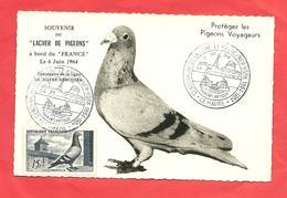 """Paquebot   FRANCE  """"souvenir Du Lacher De Pigeons """" à Bord Du France Le 6 Juin 1964 - Steamers"""