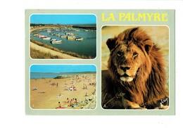 Cpm - 17 - ZOO De La PALMYRE - ROYAN - Lion - Port Plage - Lions