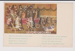 Belle Carte Vierge Chat Pub Chocolat Debeukelaer S - Werbepostkarten