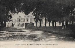 CPA  De  CRIEL Sur MER  (76)  -  Colonie  Scolaire  -  Avenue  Des  Tilleuls   //  TBE - Criel Sur Mer