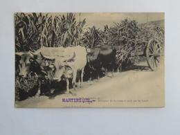 C.P.A. MARTINIQUE : Transport De La Canne à Sucre Par Les Boeufs - Martinique