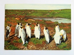 C.P.A. Du Pole Nord Au Pole Sud, POLE SUD, PINGOUINS, 2 Timbres En 1959 - TAAF : Terres Australes Antarctiques Françaises