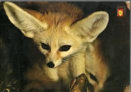 POSTAL ANIMALES CHACAL ANIMALES SALVAJES - Tierwelt & Fauna