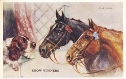Postcard Polo Ponies Show Winners And Springer Spaniel Artwork By Mabel Gear Horse Studies Series My Ref  B12271 - Horses