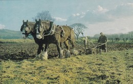Postcard Working Heavy Horses With Man Ploughing A Field Farming / Agricultural Scene My Ref  B12274 - Chevaux