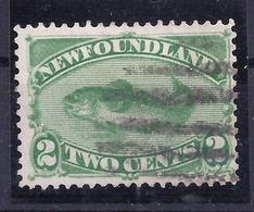 Neufundland 32 Gest. - Newfoundland