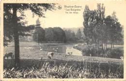 Wauthier-Braine - Les Boignées - Vue Des Etangs - Braine-le-Chateau