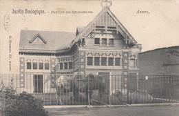 ANTWERPEN /  ZOO / DIERENTUIN / PAVILJOEN VAN DE DROMEDARISSEN - Antwerpen