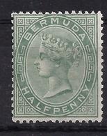 Bermuda 13 * - Bermuda