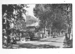 CPSM STE - ANNE-D'EVENOS  La Route Nationale      Animée Véhicules Anciens !!!! - Other Municipalities