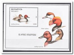 Wit Rusland 1996, Postfris MNH, Birds, Ducks - Wit-Rusland