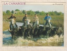 8AK1378 LA CAMARGUE GARDIANS ET TAUREAUX PHOTO AUBANEL 2 SCAN - Provence-Alpes-Côte D'Azur