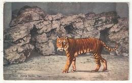 BASEL - Zoolog. Garten - Tiger - Tigre - BS Bâle-Ville