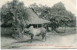 INDOCHINE CARTE POSTALE DE COCHINCHINE -PAYSAGE -TYPE DE ZEBU AYANT VOYAGEE - Postales