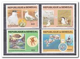 Senegal 1981, Postfris MNH, Birds - Senegal (1960-...)