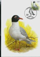 CM Du N° 3380  Mouette Mélanocéphale  - Zwartkopmeeuw   Obl. : Petit-Rechain 19/03/2005 - 1985-.. Pájaros (Buzin)