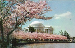 CARTE POSTALE ORIGINALE DE 9CM/14CM : JEFFERSON MEMORIAL  WASHINGTON  U S A - Etats-Unis