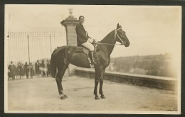 Carte Photo Raymond Poitiers-Cheval , Cavalier - Pferde