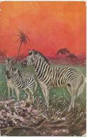 ZEBRE-VECCHIA CARTOLINA  CON ANIMALI-FP - Zebra's