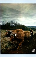 Agriculture - Attelage - Limousin Panazol - Attelages