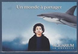 Requin, Aquarium De La Rochelle, Un Monde à Partager, - Fish & Shellfish